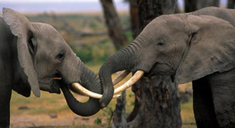 Die WWF Jahresbilanz des Artenschutzes – Gewinner und Verlierer 2014