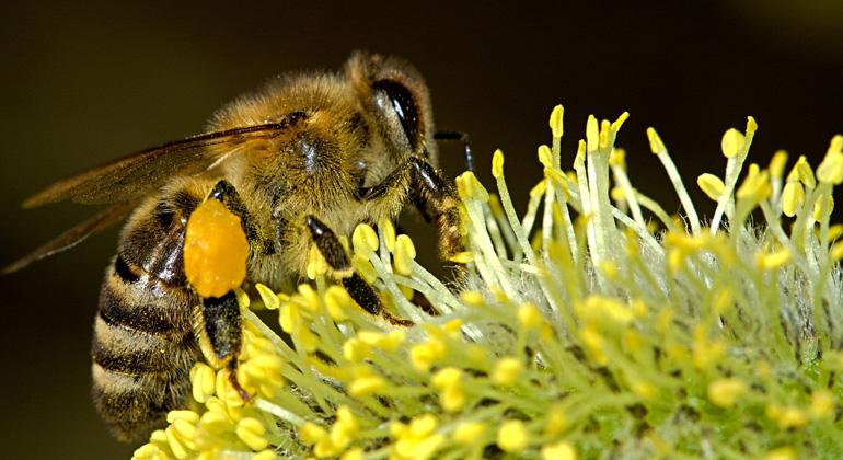 Insektenschutzpaket beschlossen: Weniger Pestizide und mehr Lebensraum für Insekten