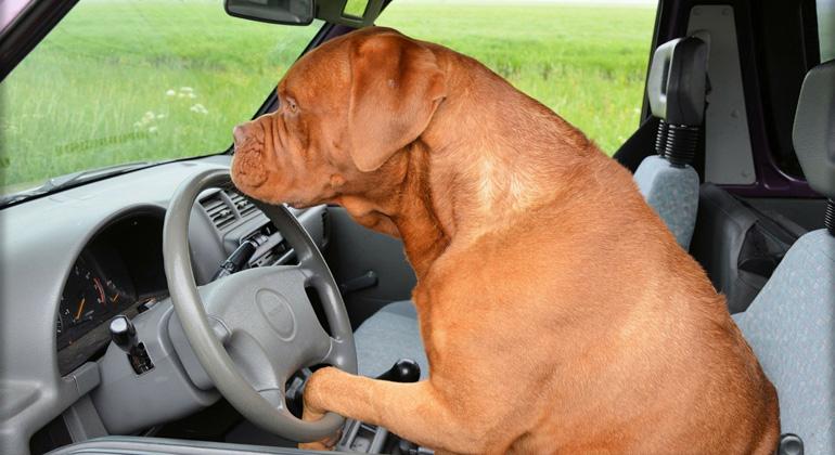 Autofahren ist heilbar