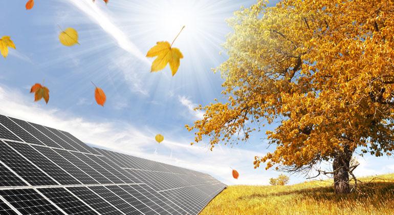 Leitfaden für naturverträgliche und biodiversitätsfördernde Solarparks veröffentlicht