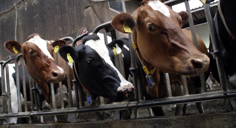 Globale Produktion von tierischen Lebensmitteln wird nachhaltiger durch weniger Kraftfutter