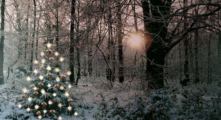 Wie kam der Weihnachtsbaum in Mode?