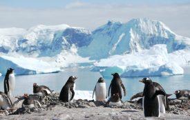 Bigi Alt | Antarktis - Cuverville | Eselspinguine