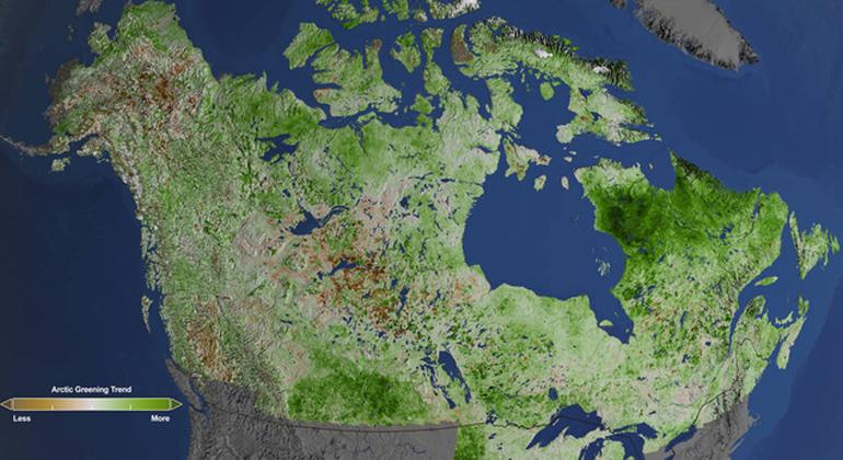 Cindy Starr | NASA Goddard Space Flight Center | Klimawandel: Aufnahmen des Landsat-Satelliten zeigen, dass die Arktis immer grüner wird