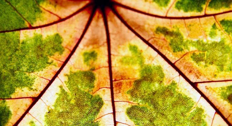 pixelio.de | VerenaN | Blatt: Forscher ahmen Prozesse der Natur nach