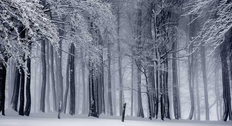 Die Großen Wälder des Nordens brauchen Schutz!