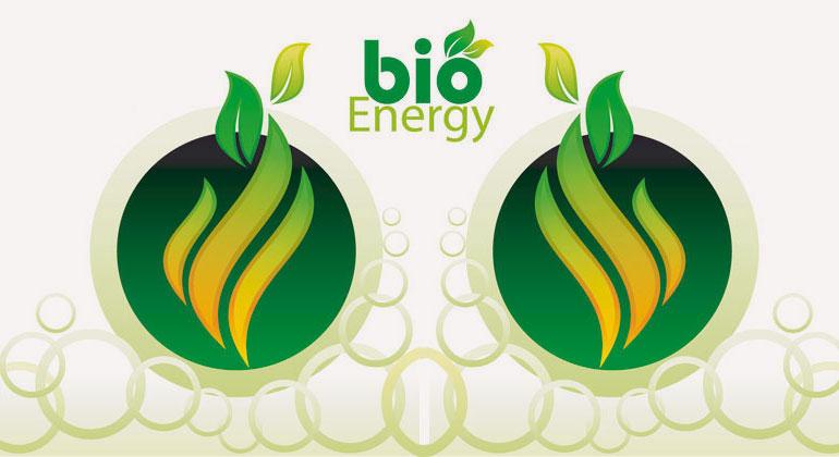 Energie vom Acker – reichlich vorhanden