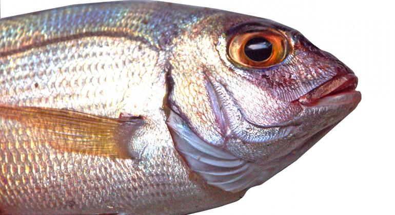 Thai Union verpflichtet sich zu 100% nachhaltigem Thunfisch