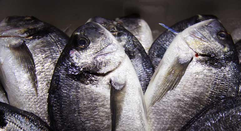 WWF kritisiert Nordsee-Fischereiquoten