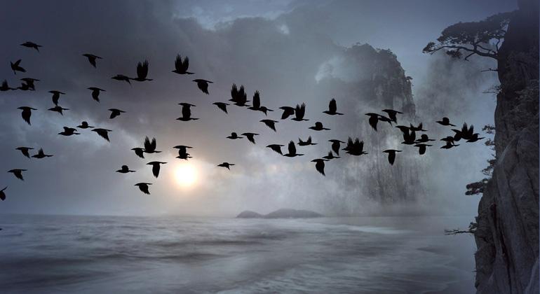 pixabay.com | Bonnybbx | In Deutschland hat seit 1980 der Bestand wärmeliebender Arten – unter anderem wärmeliebende Vogelarten - zugenommen.