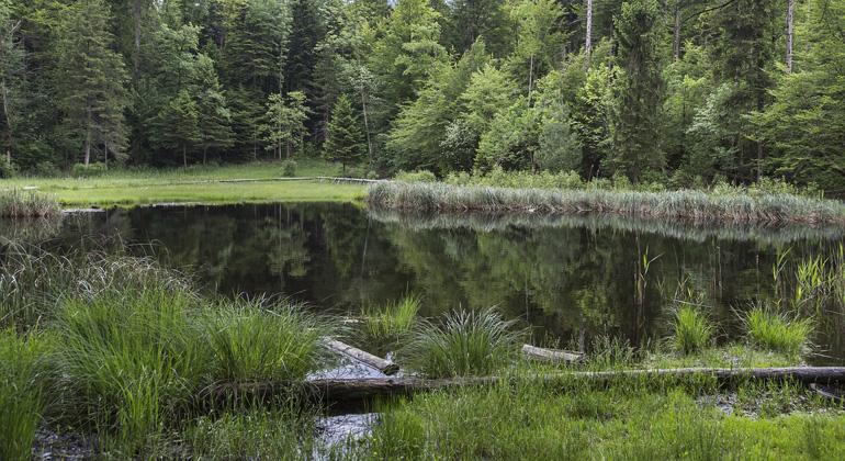 pixabay.com | Boenz | Intakte Moore speichern in ihrem Torfkörper mehr vom klimaschädlichen CO2 als Wälder.