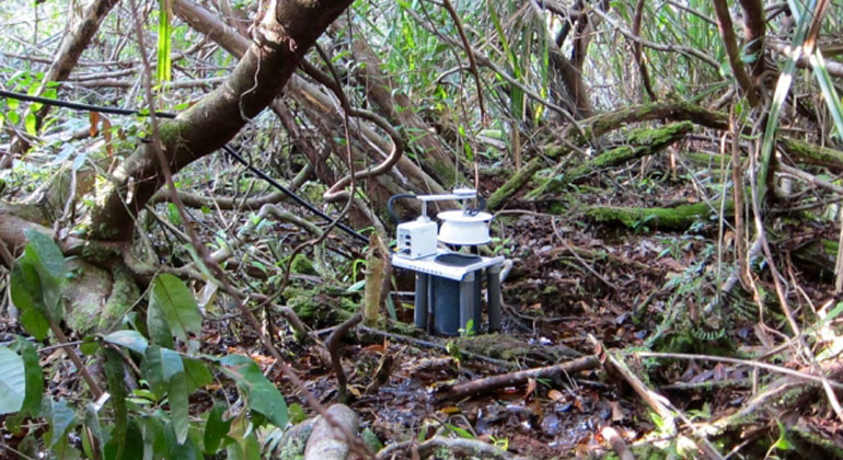 web.mit.edu | Forscher nehmen Feuchtigkeitsmessung im Regenwald vor.