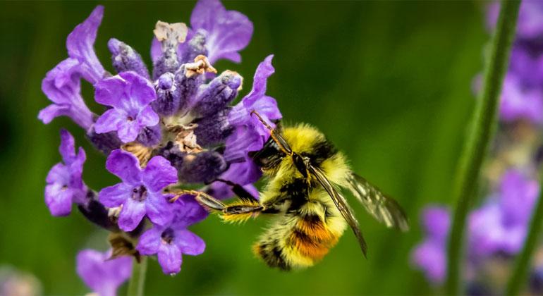 """""""bienabest"""": wildbienen im fokus - sonnenseite"""