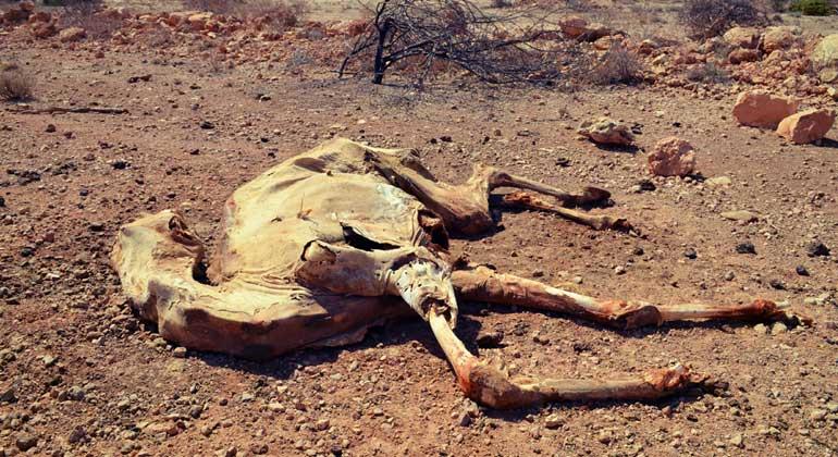 aarche noVa | gemeinsam-fuer-afrika.de | Hunger ist eine der Folgen des Klimawandels, wodurch derzeit 23 Millionen Menschen und Tiere in Afrika bedroht werden.