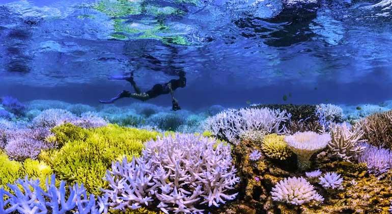 Netflix | Der Klimawandel zerstört die Meere.