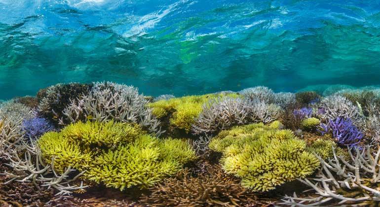 XL Catlin Seaview Survey / The Ocean Agency - Richard Vevers | Sterbende Korallen vor Neukaledonien.