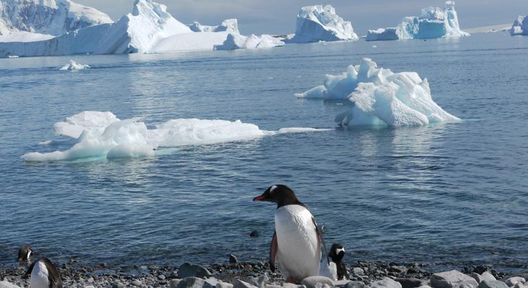 Bigi Alt | ippt die Antarktis, droht ein viel höherer Meeresspiegelanstieg als bislang angenommen.