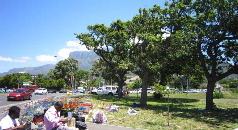 TUM | Für die Studie sind Proben von Baumkernen aus Metropolen wie hier in Südafrikas Hauptstadt Kapstadt genommen und analysiert worden.