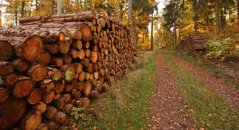 pixabay.com | Silvia11 | Nachwachsende Bäume entziehen der Atmosphäre nicht nur das klimaschädliche Kohlenstoffdioxid, sondern binden dieses auch über die komplette Nutzungsdauer.
