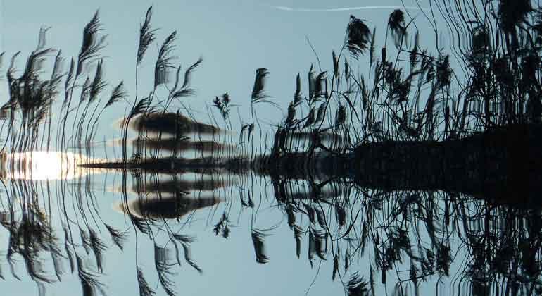 pixabay.com | Screamenteagle | Flache Seen, Teiche, Flüsse und Feuchtgebiete sind für ein Gros der globalen natürlichen Treibhausgasemissionen verantwortlich und damit besonders relevant für die Klimafolgenforschung.
