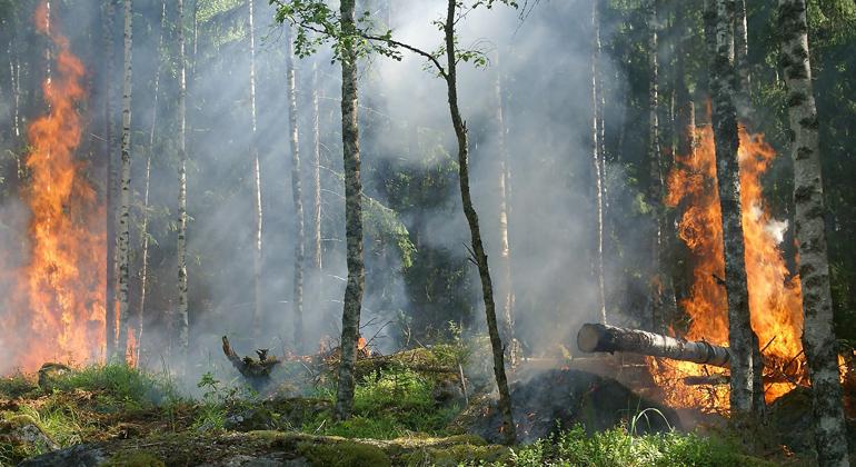 Waldbrände fachen Klimawandel mehr an als gedacht