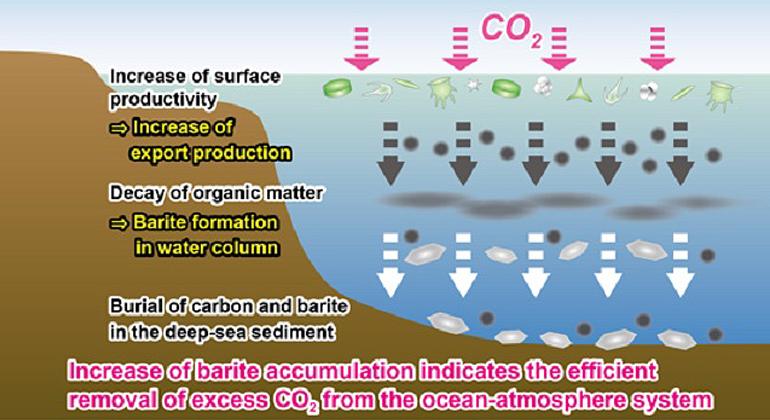 K. Yasukawa | So landeten große Kohlenstoff-Mengen auf dem Meeresgrund
