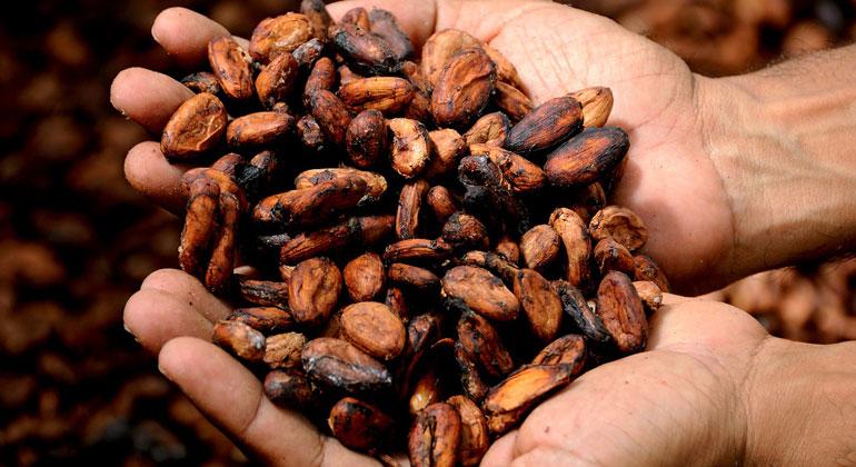 Zertifizierter Kakao darf nicht per se als nachhaltig bezeichnet werden!