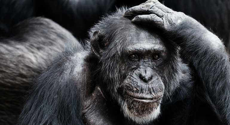 pixabay.com | PublicDomainPictures | Offenbar bewirken zehn Affen, die von der Autoindustrie für ein Diesel-Greenwashing missbraucht wurden, mehr als Jahre lange mühevolle Aufklärungsarbeit der Umweltverbände.