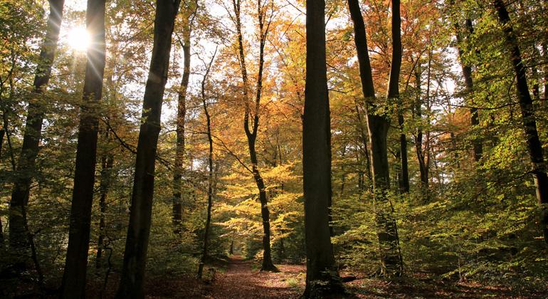 pixelio.de | angieconscious | In der weltweiten Krise des Klimawandels sind Wälder unverzichtbar für den Klimaschutz. Sie stabilisieren das Weltklima, speichern schädliches Kohlendioxid und setzen dabei Sauerstoff frei.