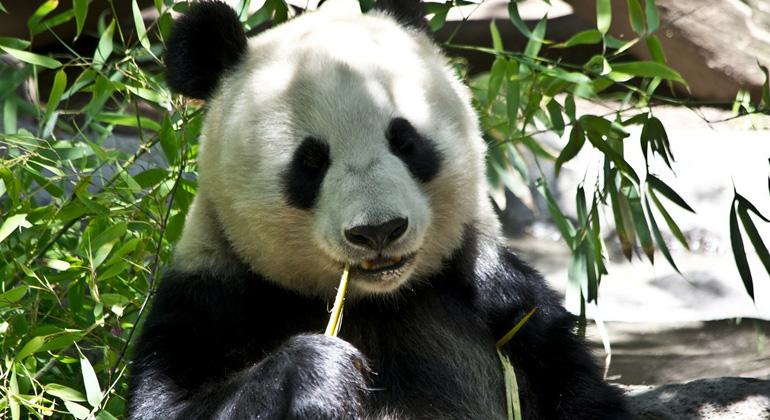 pixabay.com | PublicDomainPictures | Auf der ganzen Welt könnten ikonische Tiere wie Afrikanische Elefanten oder Große Pandas regional verschwinden, genau wie zehntausende Pflanzen, Insekten und kleinere Lebewesen, die die Grundlage des Lebens auf der Erde bilden.
