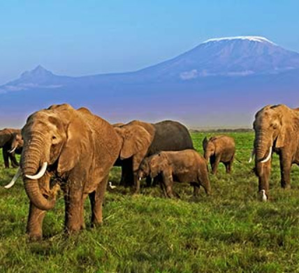 Martin Harvey / WWF | Auch Afrikanische Elefanten sind von der Erderhitzung betroffen.