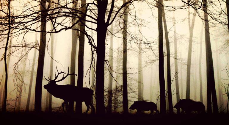 pixabay.com   cocoparisienne   Um einen weiteren Niedergang aufzuhalten müssten ein Großteil der verbliebenen Naturwälder unter strengen Schutz gestellt werden. Für Klima- und Artenschutz sei darüber hinaus entscheidend, wirtschaftliche Interessen mit dem Umweltschutz zu versöhnen.
