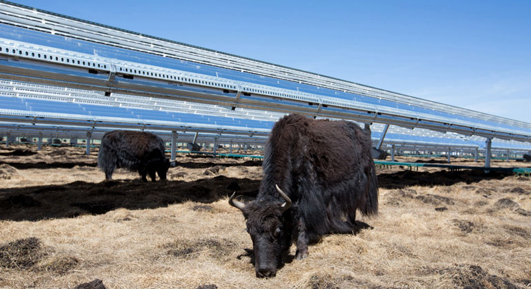 apple.com | In China, solar panels are mounted high off the ground to let sunlight shine through, so grass can grow — and local yaks can eat it.
