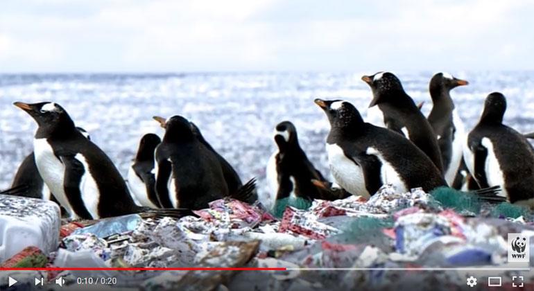 WWF Schweiz   Screenshot   Krass: Pinguine auf Insel aus Plastikmüll gesichtet.