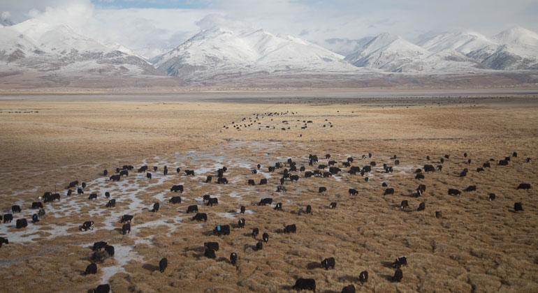 Yuriy Rzhemovskiy on Unsplash   China bereitet ein riesiges Experiment vor, um es regnen zu lassen. Der Regen soll auf die Tibetanische Hochebene fallen, die mehr als 4500 Meter über dem Meeresspiegel liegt.