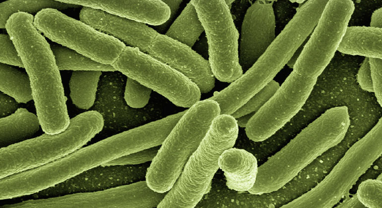 pixabay.com | geralt | Mit Hilfe von E.-coli-Bakterien soll biogenen Solarzellen der Durchbruch gelingen.