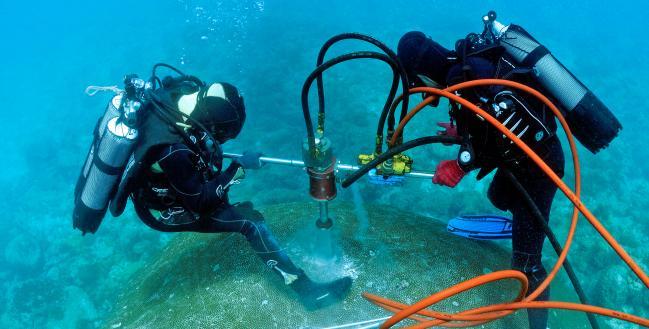 leibniz-zmt.de | John Butscher, IRD-Centre de Noumea, New Caledonia | Entnahme eines Korallenbohrkerns im Südpazifik. Zum Schutz der Koralle wird das Bohrloch anschließend mit Zement aufgefüllt.