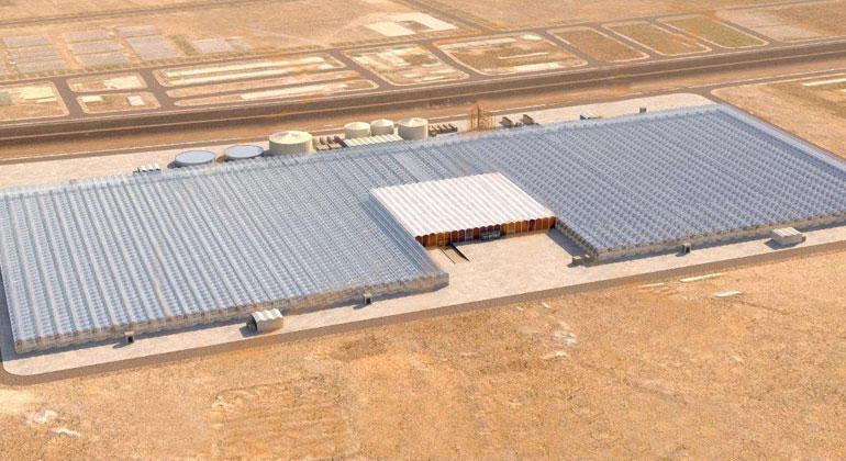 BayWa AG | Blick auf die insgesamt zehn Hektar große Produktionsanlage: Zeitgleich zum Erntebeginn im ersten Klimagewächshaus wird das zweite Klimagewächshaus bepflanzt.