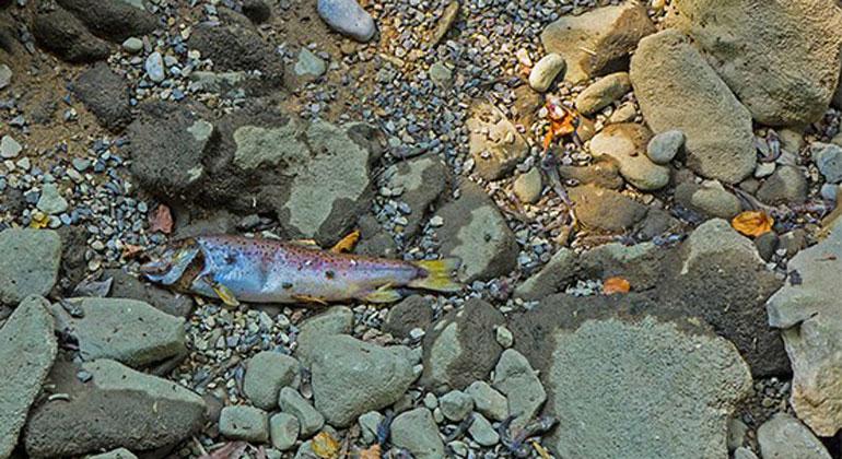 cipra.org | Massenhaftes Fischsterben war eine der Folgen dieses Hitzesommers in den Alpen.