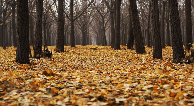 pixabay.com | Pexels | Auch im Herbst sorgt ein erneutes Niederschlagsdefizit für eine Verschärfung der anhaltenden extremen Dürre in Deutschland.