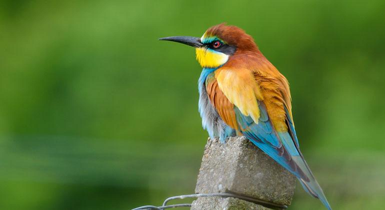 """WWF: Zahl der bedrohten Tier- und Pflanzenarten bleibt 2018 auf """"schrecklichem Rekordniveau"""""""