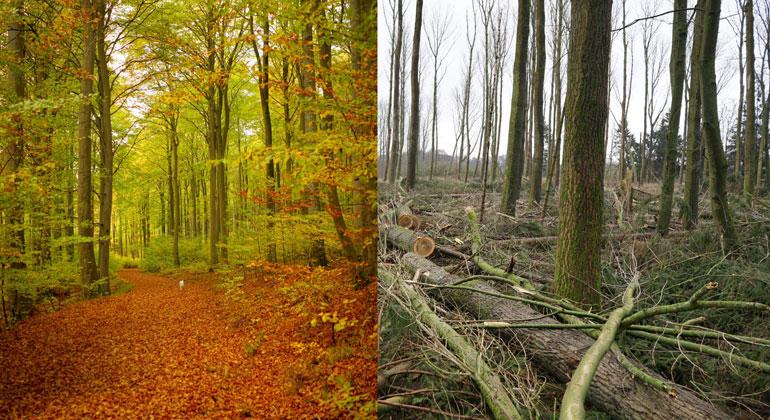 naturwald-akademie.org | Natur ist wichtiger als Holz