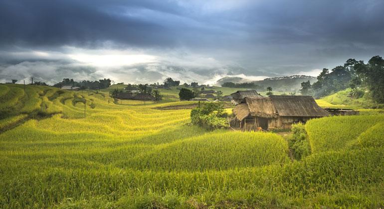 pixabay.com   Quangpraha   Reisfeld in Vietnam - Schon heute wird fast die Hälfte der bewachsenen Erdoberfläche für landwirtschaftliche Zwecke genutzt.