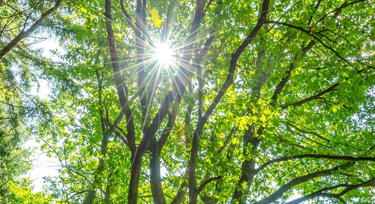 pixabay.com | Marvball | Bäume haben eine Seele: Sie schließen Freundschaft, unterstützen sich, warnen vor Gefahren.