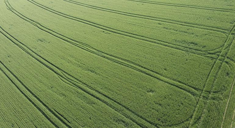 Markus Breig, KIT   Zweischneidig: Grund für das zunehmende Grün sind Ertragssteigerungen in der Landwirtschaft – die Dünger und vermehrte Bewässerung brauchen.