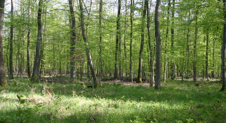 Gabi Zachmann, KIT   Wälder binden großen Mengen an CO2 – und wirken so der Klimaerwärmung entgegen.