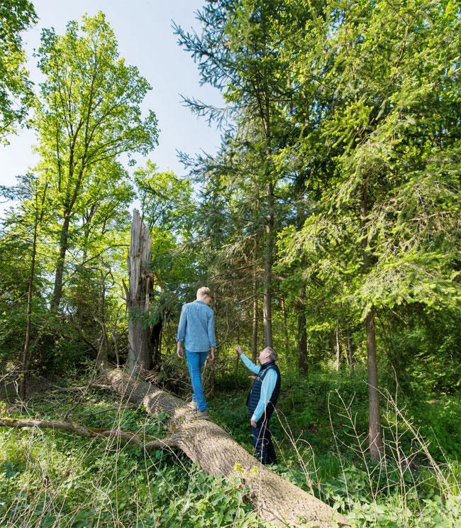 PEFC Deutschland e. V.   Für viele private Waldbesitzer stellt sich die Frage, wie sie mit Sturmschäden und anderen Auswirkungen des Klimawandels auf den eigenen Wald umgehen.