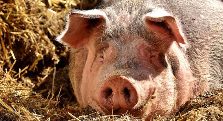 pixabay.com | AlexasFotos | Im Wesentlichen soll den Tieren in der niedrigen Stufe 20% mehr Platz gegeben werden. Geplant waren ursprünglich knapp 30%.