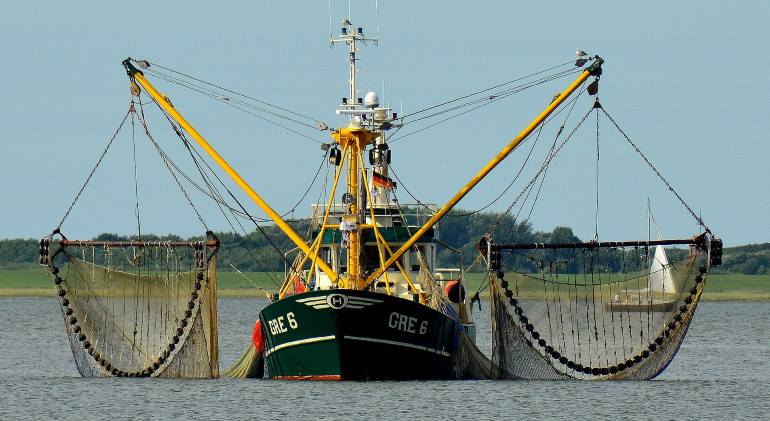 Schleppnetzfischerei gefährdet viele Arten