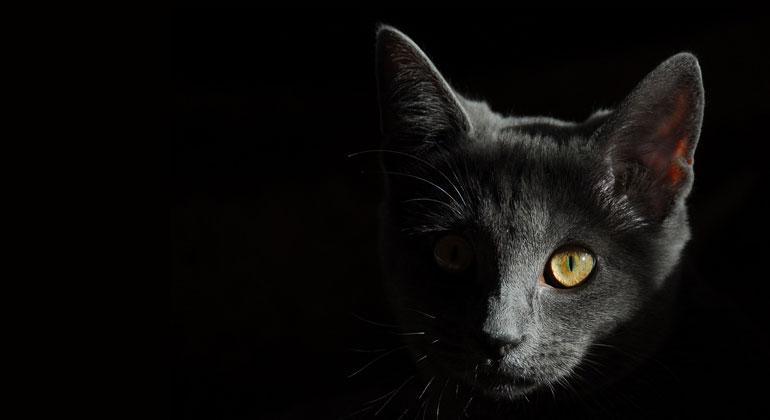 pixabay.com | male96 | Für viele sind Haustiere aus dem Alltag nicht wegzudenken, doch es lohnt sich, sich gut zu informieren, damit die Umwelt dabei nicht zu kurz kommt.
